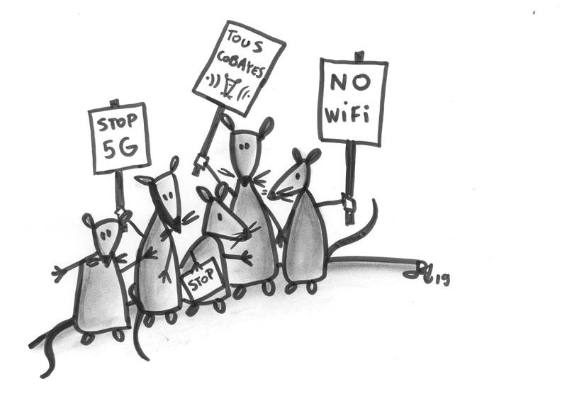 DES ONDES, DES RATS, ET DES HUMAINS…